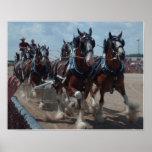 Poster del caballo de Clydesdale