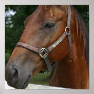 Poster del caballo de la castaña dulce