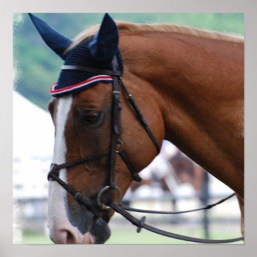 Poster del caballo de Warmblood del holandés