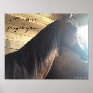 "Poster del caballo: ""Nunca le olvidaré. """