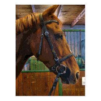 Poster del caballo postal