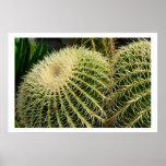 Poster del cactus