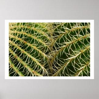 Poster del cactus póster