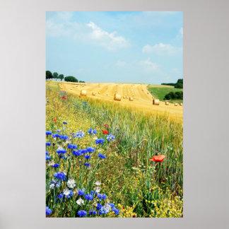 poster del campo del verano A PARTIR del 8,99