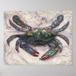 Poster del cangrejo azul de la bahía de Chesapeake