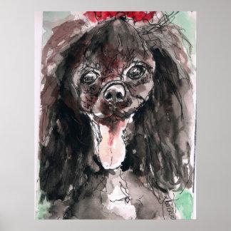Poster del caniche