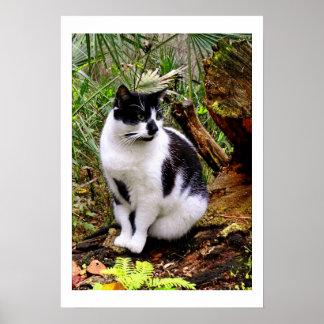 POSTER DEL CAT