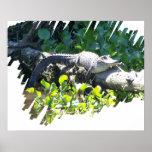 Poster del cazador del cocodrilo del pantano de Lu