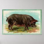 Poster del cerdo - arte del vintage