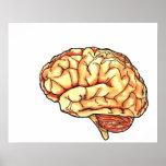 Poster del cerebro