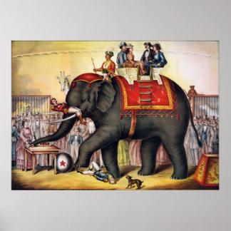 Poster del circo del vintage - ejecución del elefa