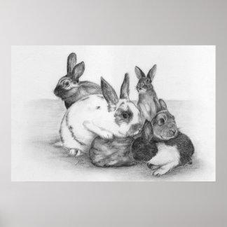 Poster del conejo