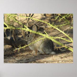 Poster del conejo de conejo de rabo blanco
