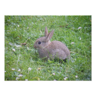 Poster del conejo del bebé
