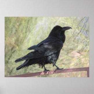 Poster del cuervo