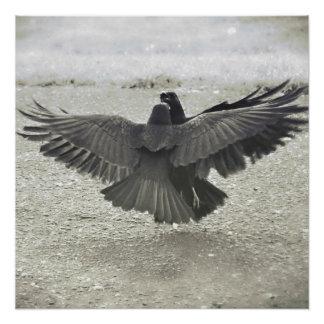 Poster del cuervo/del cuervo