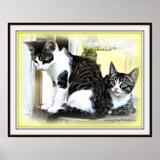 Poster del cuteness del gatito