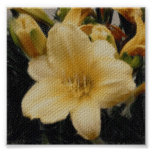 Poster del Daylily