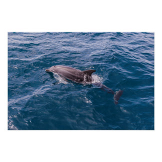 Poster del delfín de Bottlenose