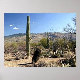 Poster del desierto 03 de Sonoran