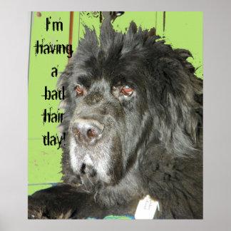 Poster del día del pelo del perro de Terranova mún