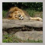 Poster del diseño del león
