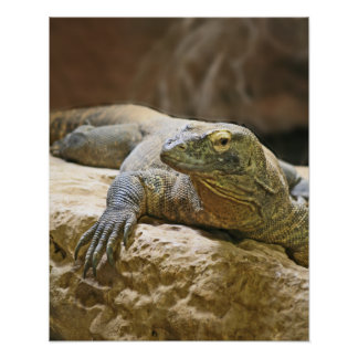 Poster del dragón de Komodo Póster