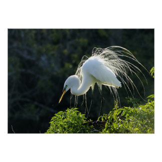 Poster del Egret