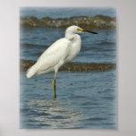 Poster del Egret nevado