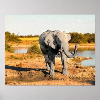 Poster del elefante africano
