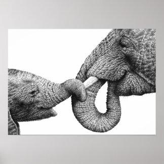 Poster del elefante africano y del becerro