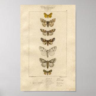 Poster del espécimen de los Nocturnes