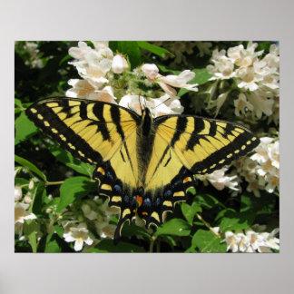 Poster del este de la mariposa de Swallowtail del