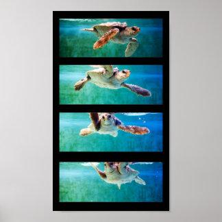 Poster del estudio de la tortuga de mar del necio