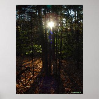 Poster del filtro del bosque