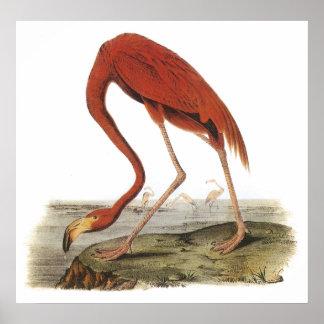 Poster del flamenco de Audubon
