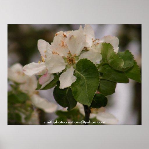 poster del flor de la manzana