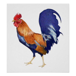 Poster del gallo póster