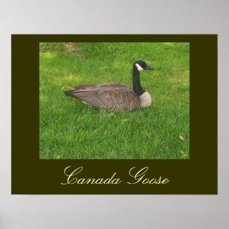 Poster del ganso de Canadá