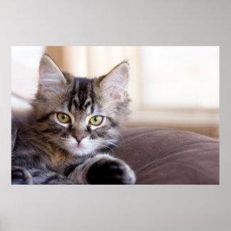 Poster del gatito