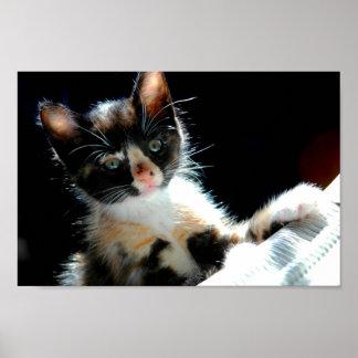 Poster del gatito del calicó