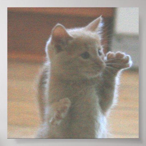 Poster del gatito póster