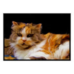 Poster del gato de calicó