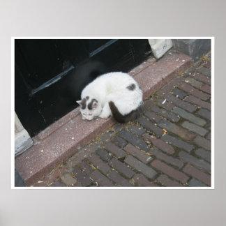 Poster del gato de la puerta principal el dormir póster