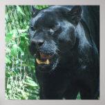 Poster del gato de pantera negra