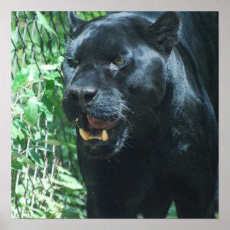 Poster del gato de pantera negra póster
