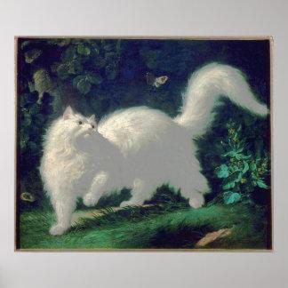Poster del gato del angora póster
