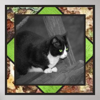 Poster del gato del corral