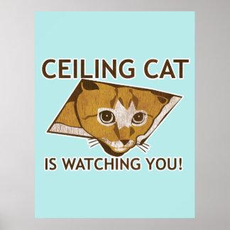 Poster del gato del techo