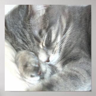 Poster del gato el dormir